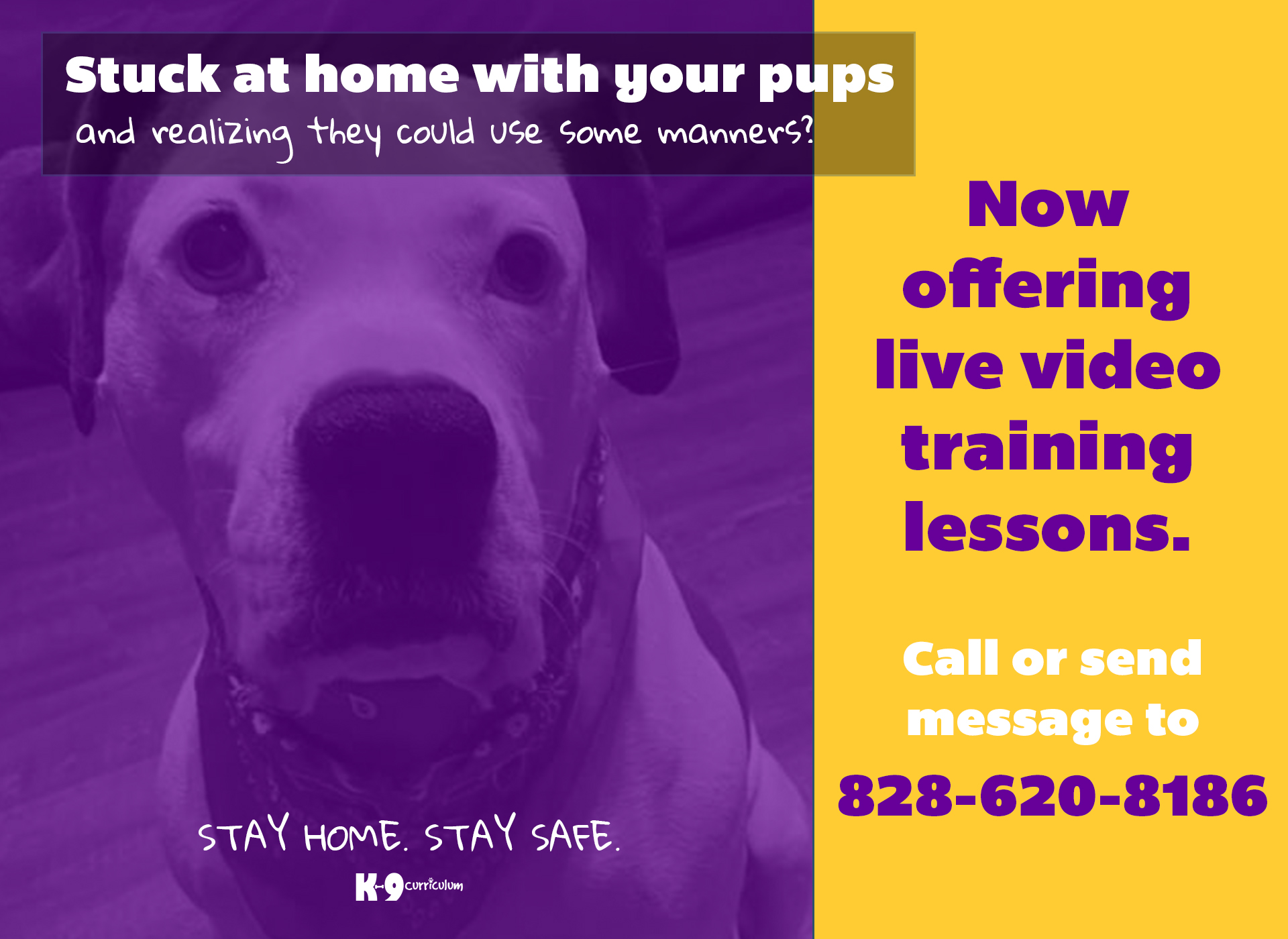 k9 Curriculum Dog Groomer and obedience training Asheville, Canton, Waynesville, NC